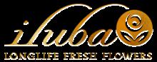 Iluba gold logo v2 new small